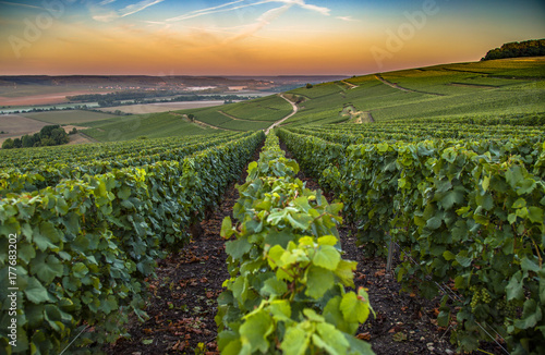 Wall Murals Vineyard Champagne region in France. A beautiful view.