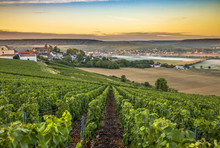 Champagne Region In France. A ...