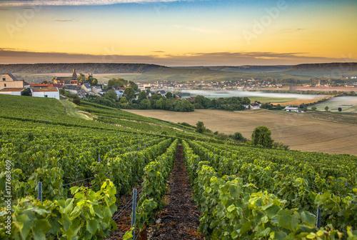 Photo sur Aluminium Vignoble Champagne region in France. A beautiful view.