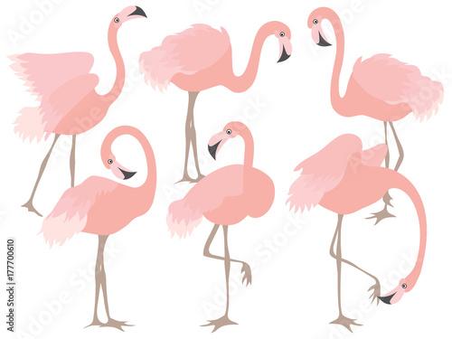 Canvas Prints Vector Set of Beautiful Coral Flamingos
