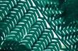 Light through a fern abstract