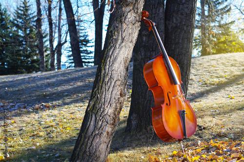 Fototapeta Wiolonczela outdoors w parku w spadek jesieni dniu z kolorowymi liśćmi