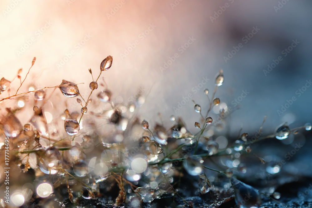 Fototapety, obrazy: Dew drops on grass and blurred bokeh background