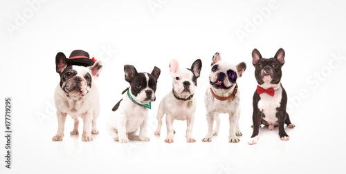Foto op Plexiglas Franse bulldog group of five adorable french bulldogs