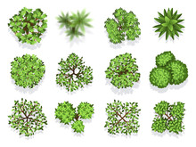 Top View Tree Collection - Green Foliage Isolated On White Background