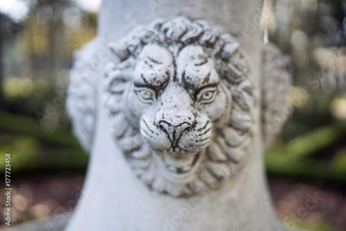 Plakat biały tygrys kamień