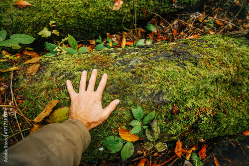 Fotografía  the man hand touches the moss on the tree in the forest