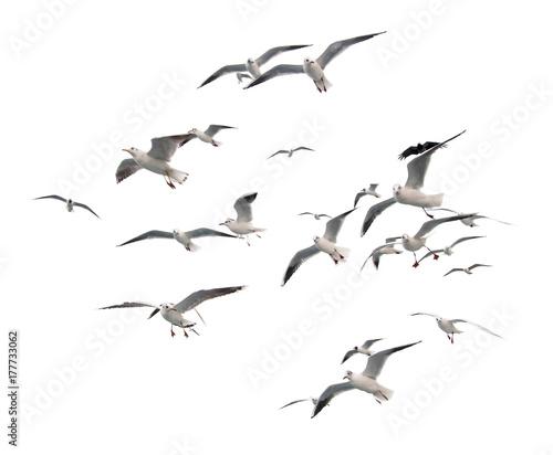 Flying seagulls (isolated) Wallpaper Mural