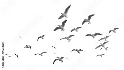 Montage in der Fensternische Vogel Flying seagulls (isolated)