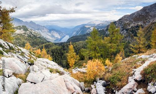 Plakat Kolorowi modrzewiowi drzewa z górami i jeziorem. Park Narodowy Berchtesgaden.