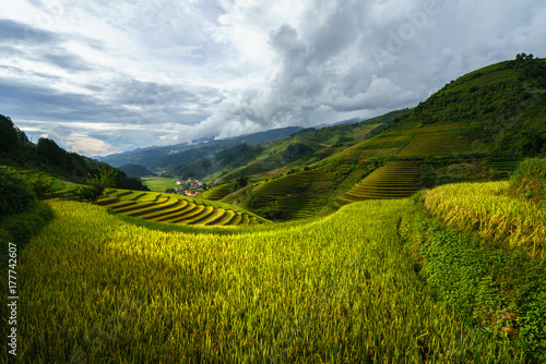 Photo sur Toile Les champs de riz Terraced rice field in harvest season in Mu Cang Chai, Vietnam.