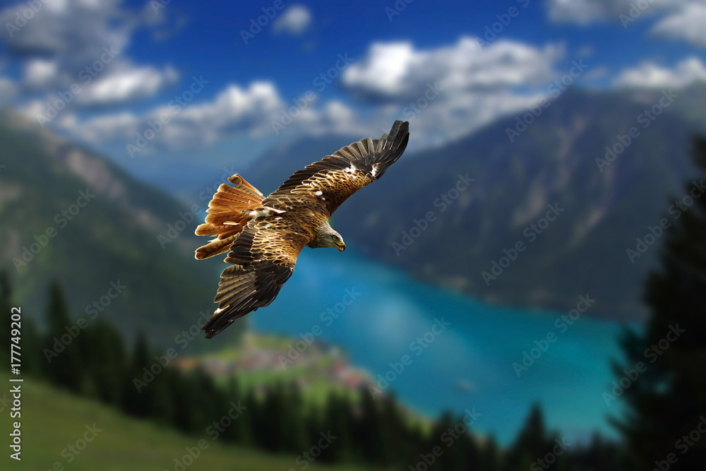Red Kite flies in a breathtaking mountain landscape