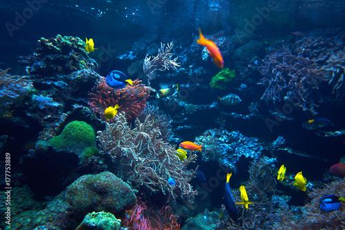 Plakat podwodne tło. Podwodna scena. Podwodny świat. Podwodny krajobraz życia