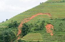 Land Slide Or Erosion On Rice ...