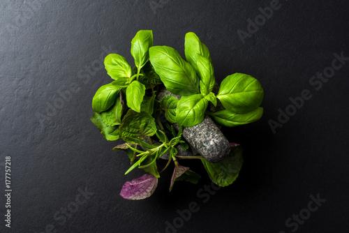 Obraz Fresh herbs inside of stone mortar with pestle - fototapety do salonu