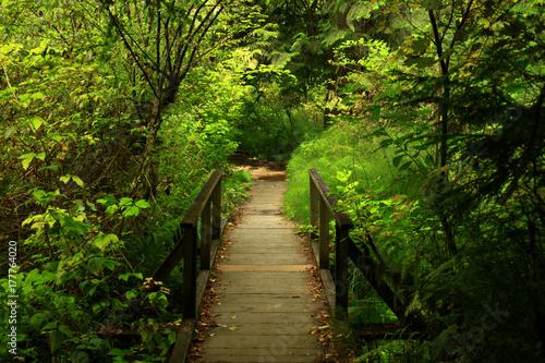 Foto op Plexiglas Landschappen a picture of an Pacific Northwest forest trail