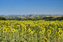 Summer Landscape In Marches Ne...