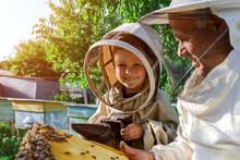 An Experienced Beekeeper Trans...