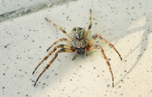 Spider On The Floor Close Up