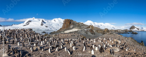 Antarctic panorama with hundreds of chinstrap penguins crowded on the rocks with snow mountains in the background, Half Moon Island, Antarctica