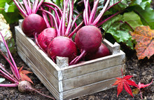 Beetroot In A Wooden Crate. Fr...