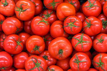Delicious Red Tomatoes In Summ...
