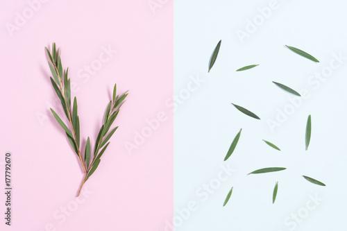 Minimal green leaf on pastel background.
