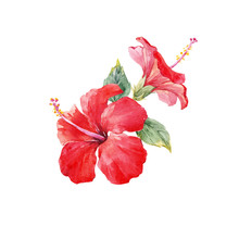 Watercolor Hibiscus Composition