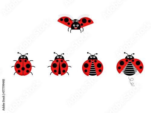 Fototapeta premium Kreskówka biedronka wektor zestaw na białym tle z tła. Śliczna biedronka na liściu lub latająca w stylu płaski. Symbole śmieszne owady i chrząszcze.