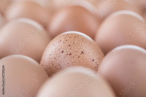 Plakat Brązowe jaja kurze