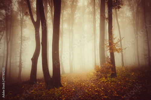 autumn-landscape-trees-in-misty