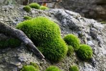 Moss. Slovakia
