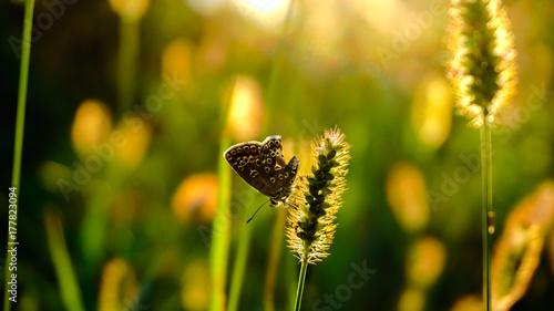 Plakat słońce motyl