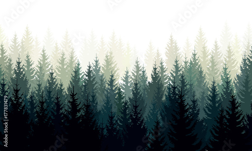 Foto op Canvas Wit Vector landscape with green silhouettes of coniferous trees in the mist
