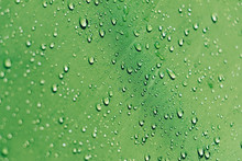 Drops Of Water On A Green Surf...