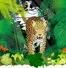 Vector Isolated Leopard Or Jaguar In Jungle Rainforest