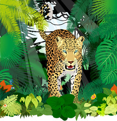 Fototapeta Las vector isolated leopard or jaguar in jungle rainforest