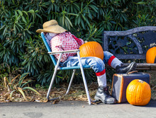 Halloween Scarecrow On Lounge Chair With Pumpkins & Suitcase