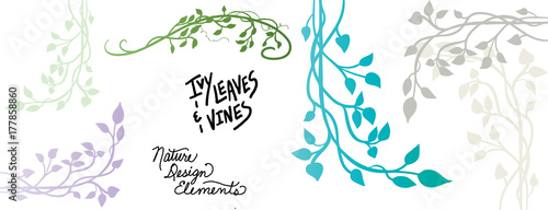 vines and ivy vector designs with branches and leaves, climbing vine in a decora Fototapeta