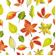 Digital seamless pattern of illustration and vector of traditional thanksgiving and autumn or fall forest leaves, red, orange, green maple leaves