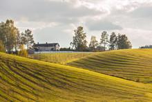 Green Fields After Haymaking