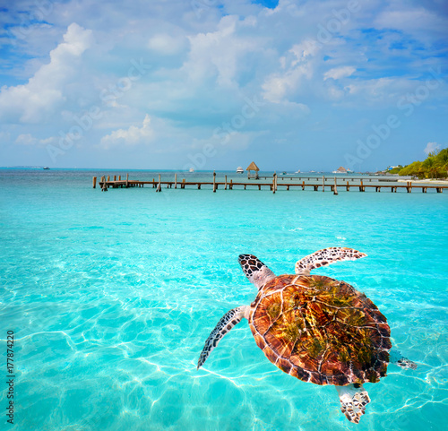 Photo Stands Turquoise Isla Mujeres island Caribbean beach Mexico