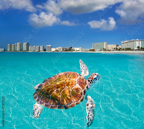 Photo Stands Turquoise Cancun beach turtle photomount Mexico