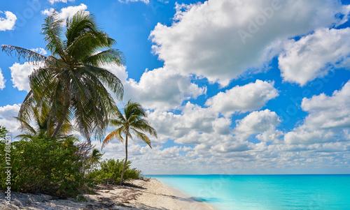 Poster Palmier Holbox Island paradise beach palm tree Mexico