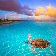 Mahahual Caribbean Beach Turtle Photomount