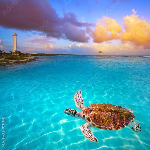 Cadres-photo bureau Caraibes Mahahual Caribbean beach turtle photomount
