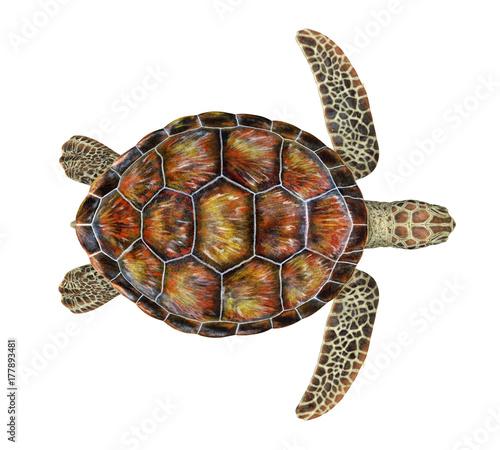 Sea Turtle Isolated Fotobehang