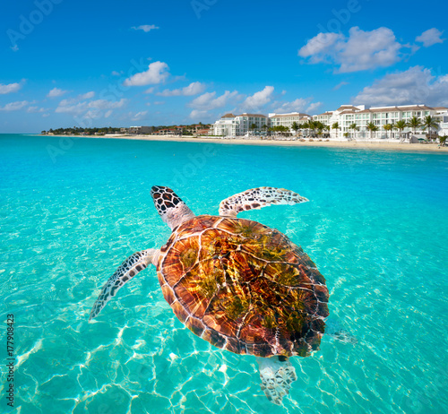 Photo Stands Turquoise Playa del Carmen turtle photomount Mexico