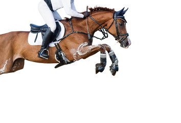 Jumping horse on white background.