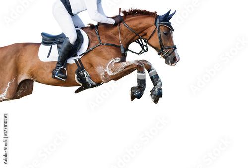 Photo  Jumping horse on white background.